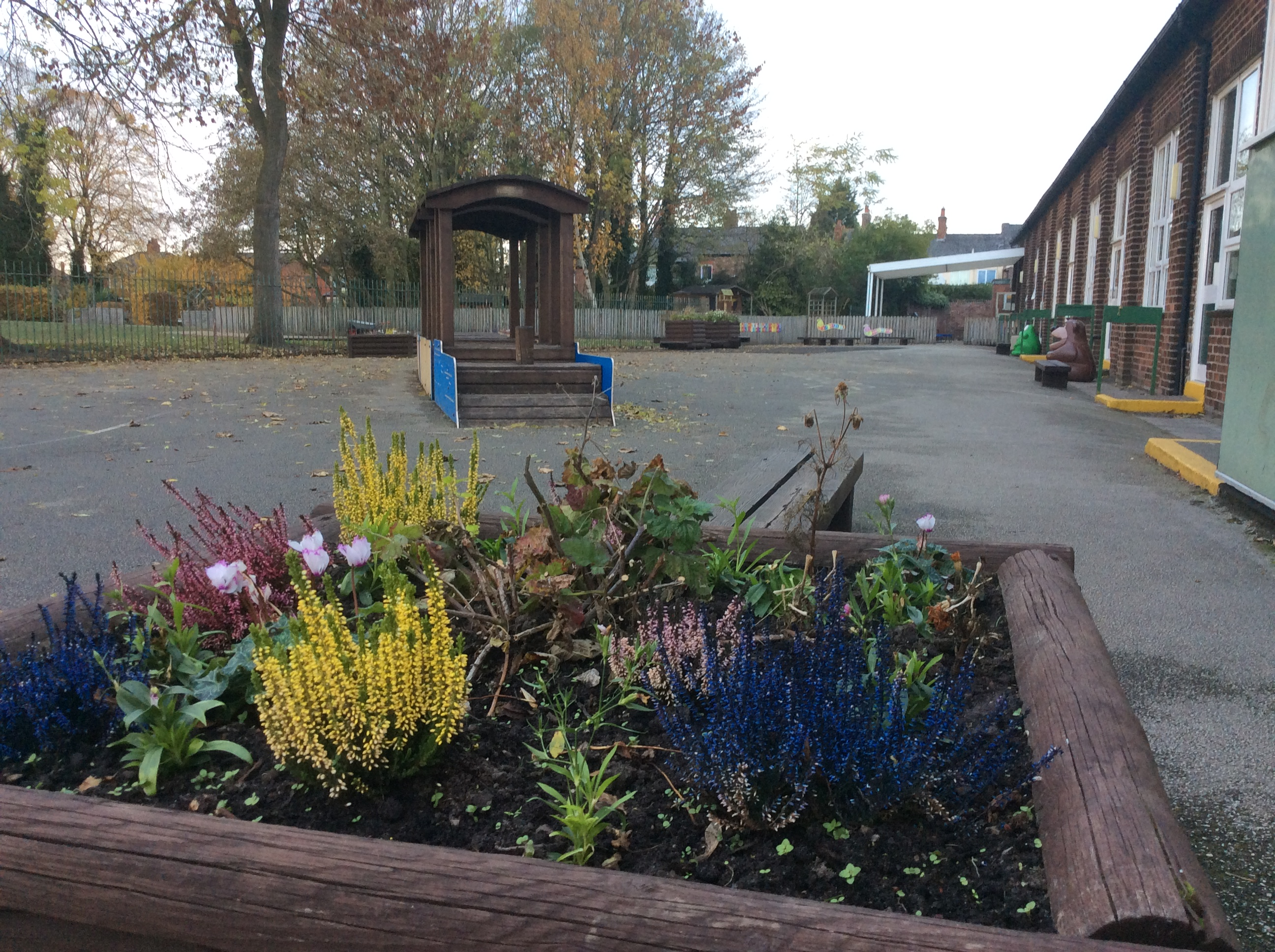 Autumnal Flowers in the Infant Playground